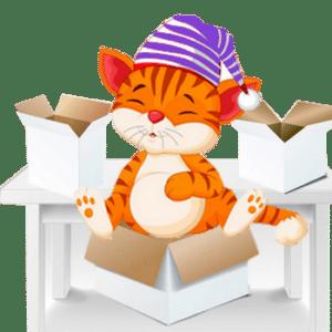 déménager avec un chat sans stress
