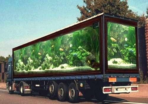 déménagement aquarium par professionnel