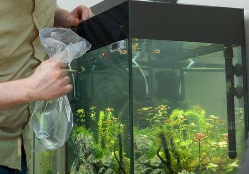 préparation aquarium avant déménagement